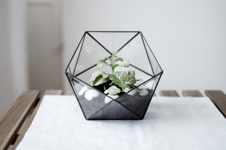 2 glass terrarium