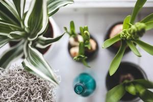 plants-via-pixabay