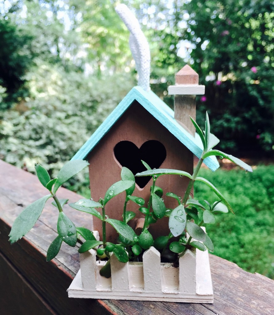 3 Miniature Painted Birdhouse with Live Plants