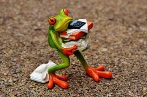 frog via pixabay